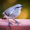 Bird in our backyard in Austin