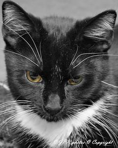 Tucker Eyes