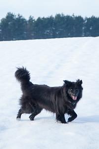 Bear - Winter - Pet Photography