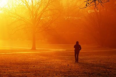 Sunrise Stroll through Azalea Garden