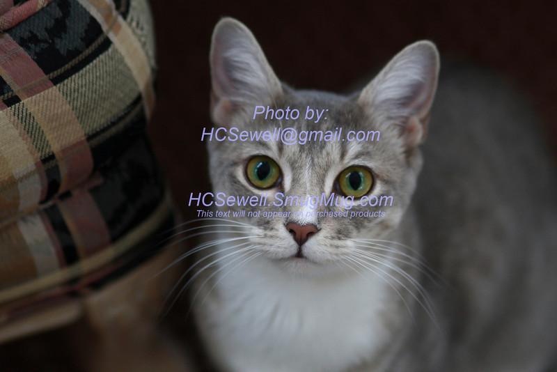 HCS_8529