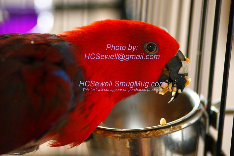 HCS_8562