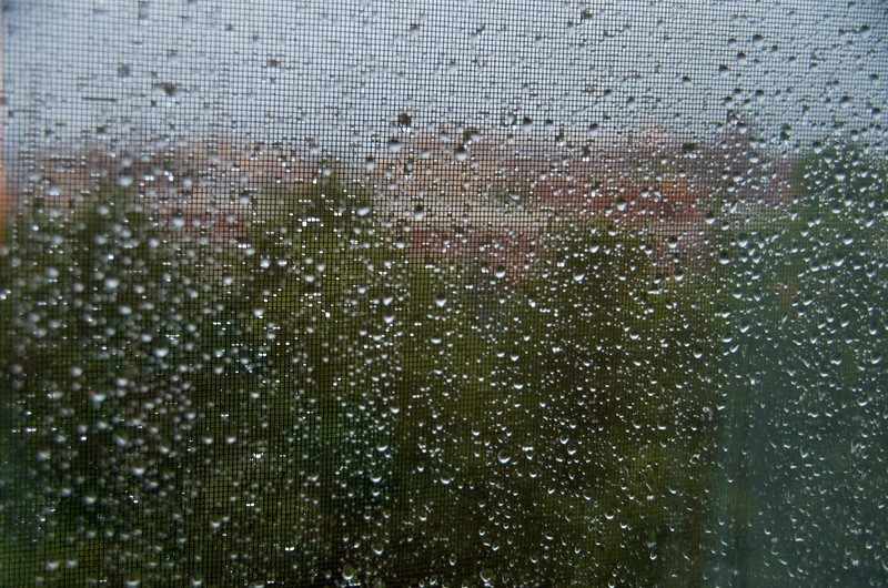 Day 290 -A rainy gloomy day here.  That's all.