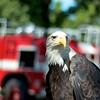 Day 349 -I got to see my favorite animal up close today.  I got a good angle so that I could dedicate to all of my firemen friends.  You know who you are.