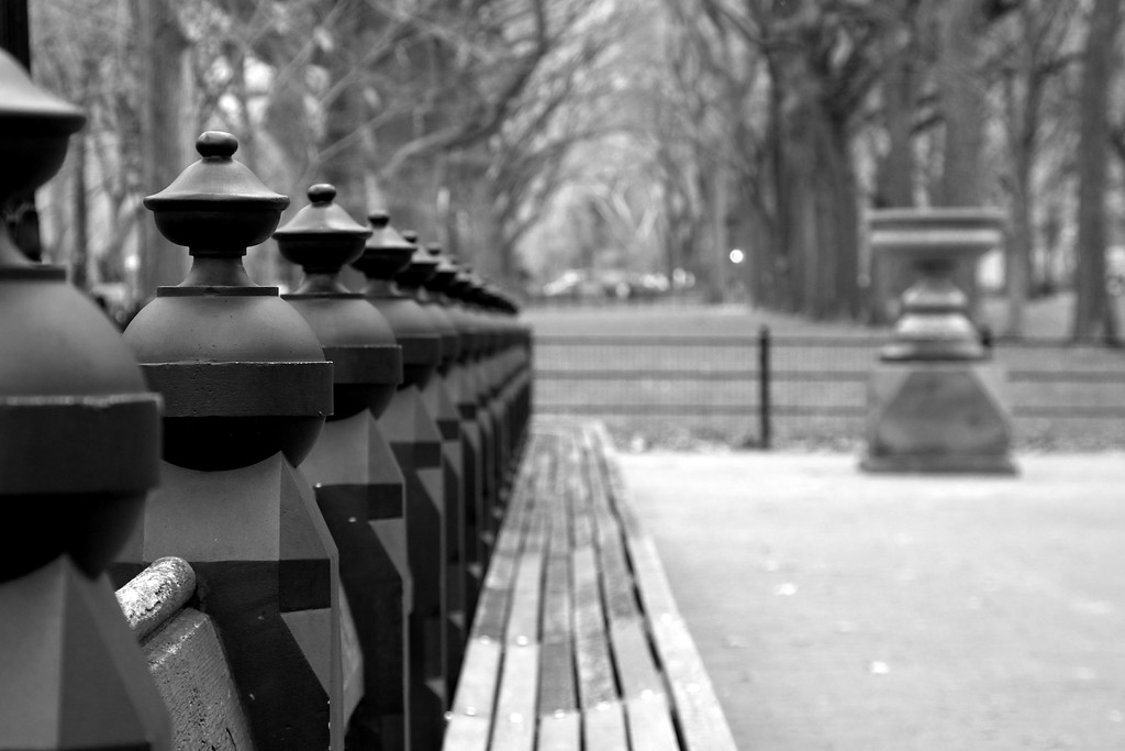 Day 213 -Central Park yet again, but I could do a whole year just in the park.  In fact if I was going to be here I would do just that.  This took place on the mall and I really like the black things, but I don't know what they're called.  Giving up color for Lent.
