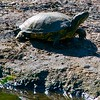Day 016 -Today a turtle was sunbathing in the park along with a lot of other New Yorkers.  I like the reflection that I didn't know I got.  It was Christina's idea so she should get the credit.