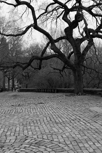 Day 217 -Just on the edge of the park was the cool huge tree and I loved how it contrasted the light brick on the ground.  Giving up color for Lent.