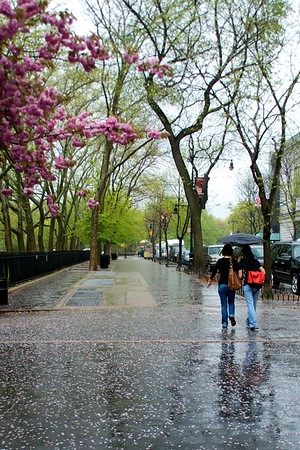 Day 235 -Another rainy day that brings two friends huddled under one broken umbrella.  Spring is here though and everything is budding and blooming