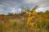 State Game Lands No. 333, PA, USA, October 2014