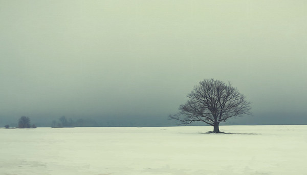 Embracing The Solitude