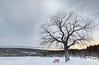 Colyer Lake, PA, USA, February 2021