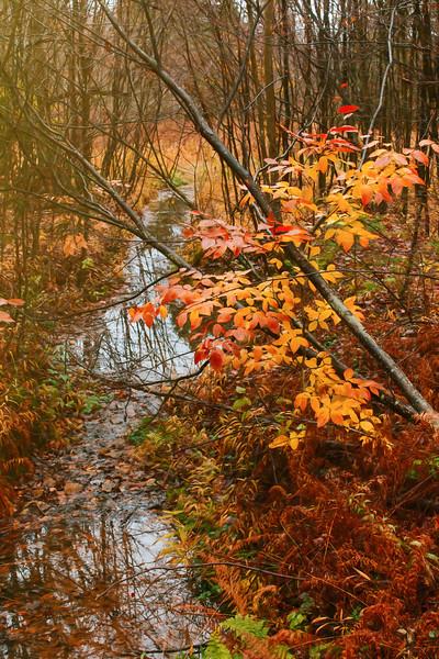 Buzzard Swamp, PA, USA, October 2015