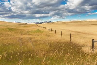 Montana Prairie
