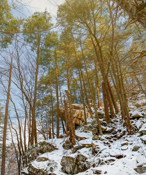 Rothrock State Forest, PA, USA, January 2021