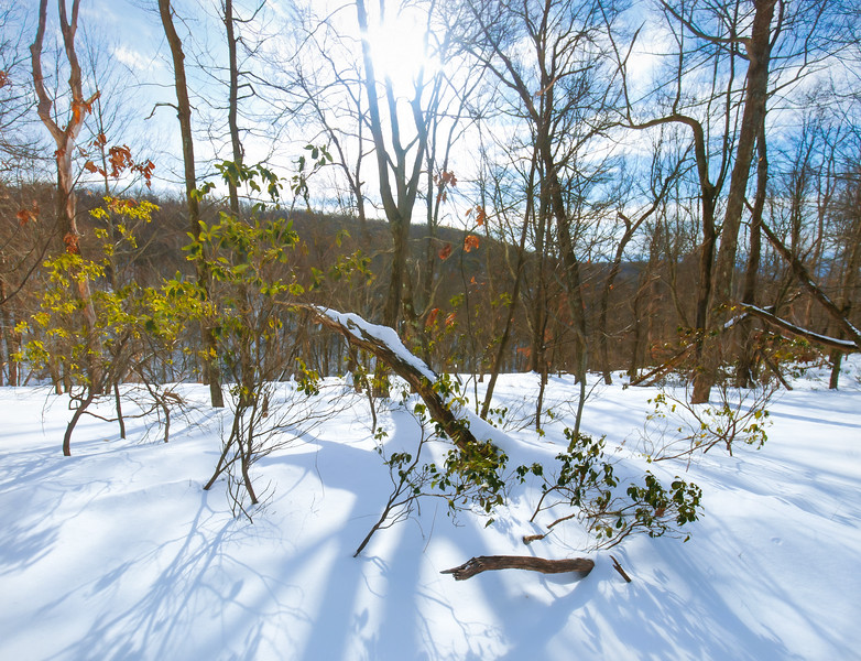 Moshannon State Forest,  PA, USA February 2021