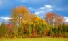 Bernel Road Park, PA, USA, October 2020