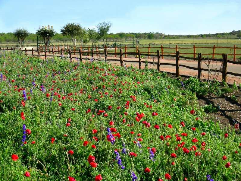 Wildseed Farm, Roberta Przy