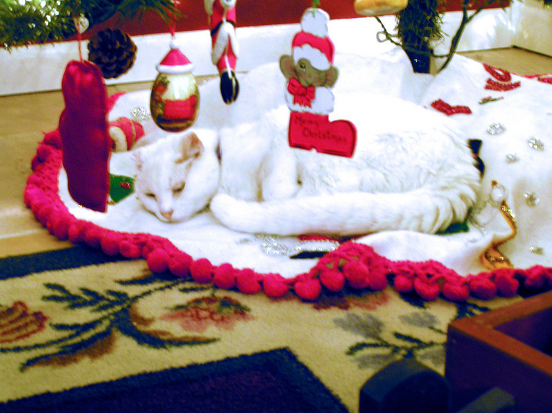 Sam enjoying Christmas under the tree from Clemmie Hext