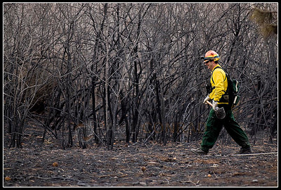 © Paul Conrad/Pablo Conrad Photography  Aspen volunteer fire fighter Chris Olsen walks among burned brush while searching for hotspots in the Roaring Fork Preserve subdivision along Catherine Store Road.