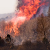 © Paul Conrad/Sky Fire Photography<br /> A grove of cottonwood explodes in flames as the 100 Road wildfire jumps Highway 82 east of Carbondale, Colo