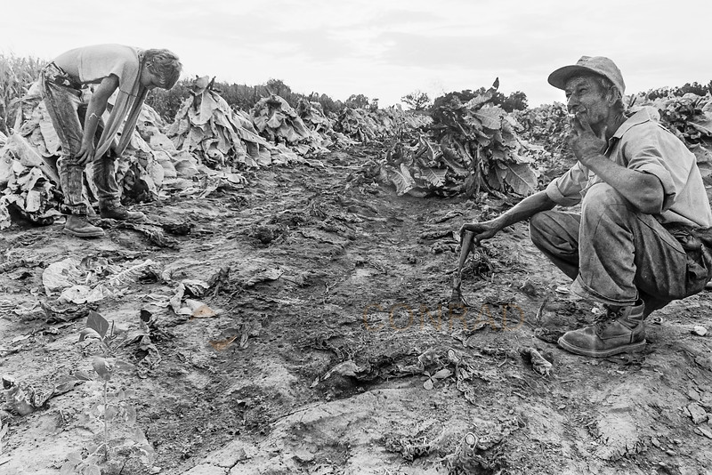 Extremely Hot Work - Kevin Cardwell, left, and his father Billy Ray Cardwell take a break after spiking a row of tobacco. (© Paul Conrad/Paul Conrad Photography)