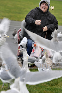 © Paul Conrad/ Pablo Conrad Photography  A man feeds the gulls in the Seattle Center on Saturday afternoon Dec. 5, 2010, in downtown Seattle, Wash.