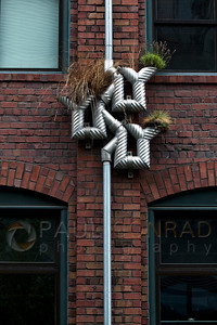 © Paul Conrad/ Pablo Conrad Photography  What do you do with all the rain that falls in Seattle, Wash.? Create a unique gutter to water your plants.