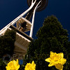 © Paul Conrad/ Pablo Conrad Photography<br /> <br /> Dafodils reach for the sky under the Space Needle in Seattle, Wash.