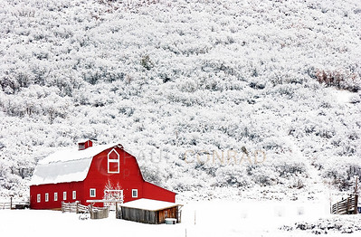 © Paul Conrad/Pablo Conrad Photography A red barn in stark contrast after fresh snow covers the surrounding brush along McLain Flats Road west of Aspen, Colo.