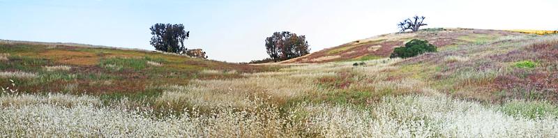 Santa Teresa - Nature's Quilt