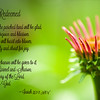 Joy Of The Redeemed - Isaiah 35:1-2 - Scripture Photography