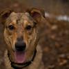 2/14/12 - Moondog