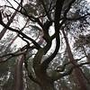 dancing trees 2