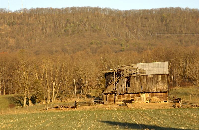 Horse & collapsing barn, Singer's Glen, VA  -  10/30/2010 ?