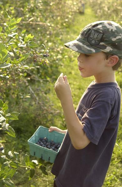 Nephew picking blueberries at Bobwhite Acres, Spinnerstown, PA  - 6/29/2012