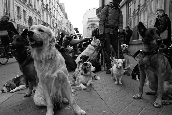 Dog Walk - Paris, France