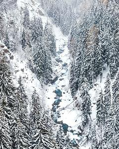 A winding creek between a pine forest, Valais