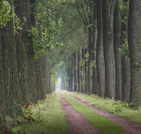 Miles and miles of biking lanes cut through scenic tree tunnels in northern Belgium, running alongside peaceful canals. The beautiful thing is that you can start from Bruges and bike your way endlessly in these sceneries. This particular photo has been taken near the town of Damme.