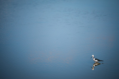 The Lone Wader - 365/364