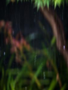 Chasing raindrops - 365/331