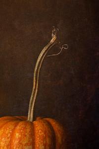 Just a Crazy Pumpkin Stem...