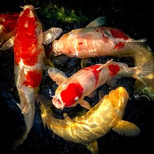 Рыбы в квадрате