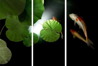 Рыбы и космос. Триптих