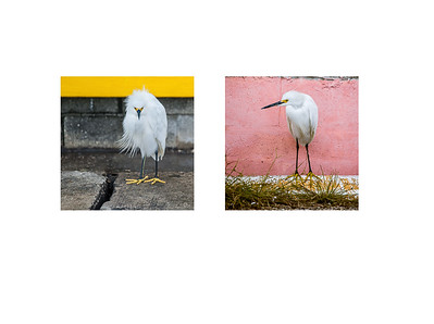 Птицы на мосту Key West