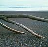 kirby_branch_beach