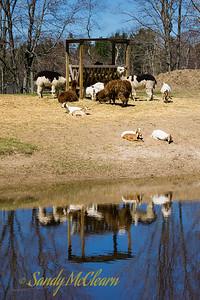 Oaklawn Farm Zoo