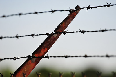 Barbed wire. Edited.