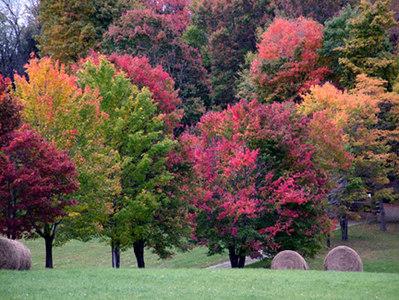 2004_Ft Ligonier - Trees2