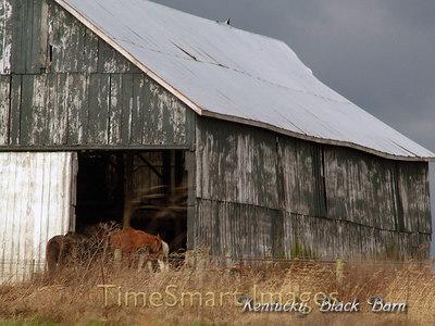 Kentucky Black Barn