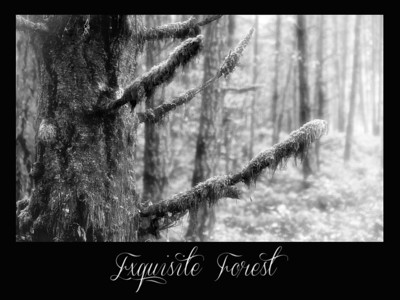 Exquisite Forest